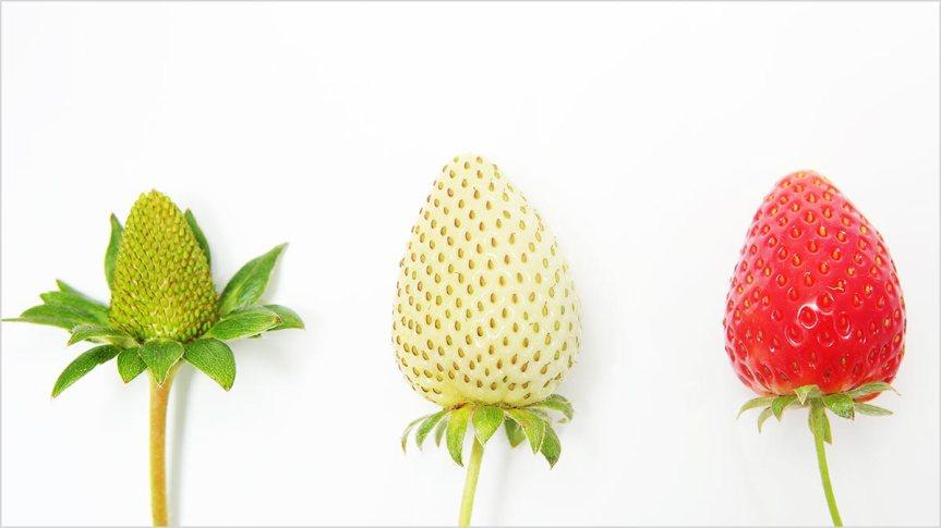 Strawberry Growth www.brilliantbusinessblogs.com