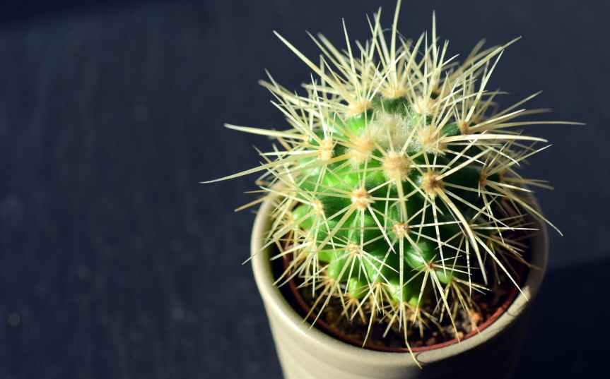 cactus close up decoration exotic