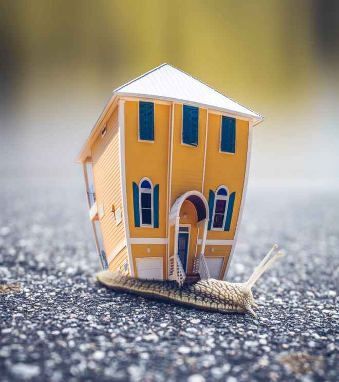 microphotography of orange and blue house miniature on brown snail s back