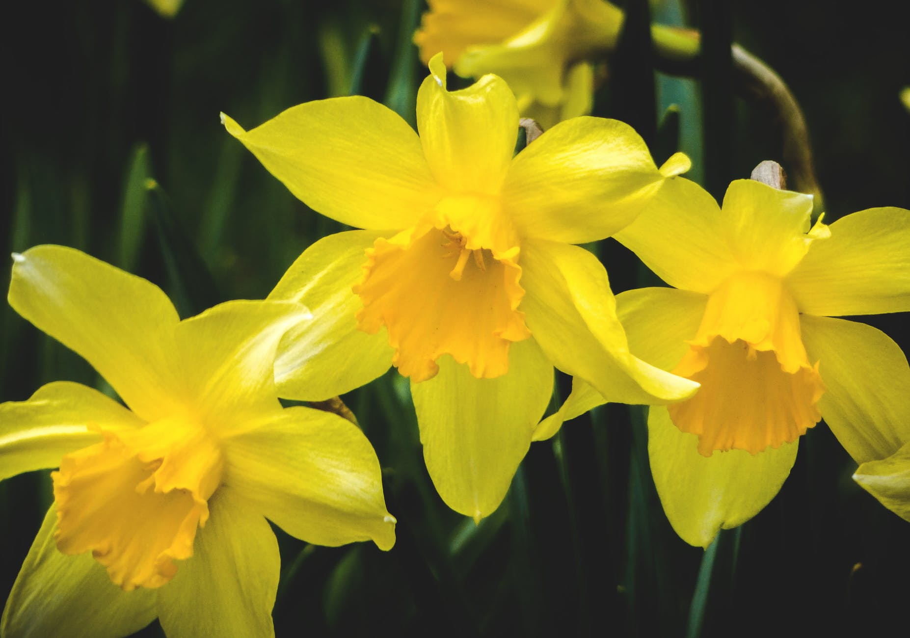 selective focus photography of yellow flowers